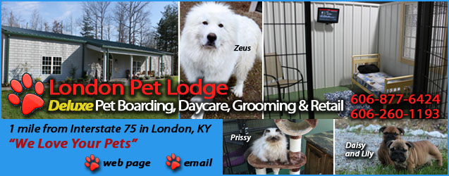pet, dog, cat, boarding, kennel, hotel, grooming, lodge, london, ky, kentucky